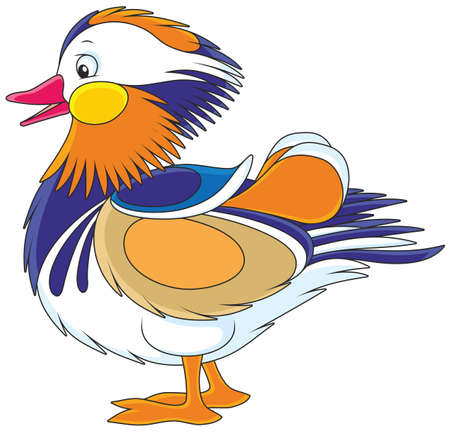 Motley mandarin duck Stock Vector - 91002574