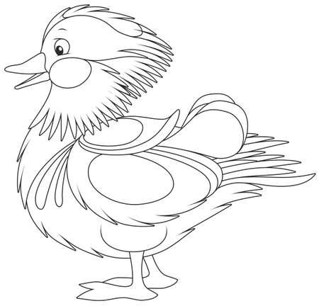 Amazing Mandarin duck