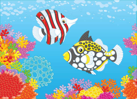 Butterfly fish and triggerfish Vector illustration. 일러스트