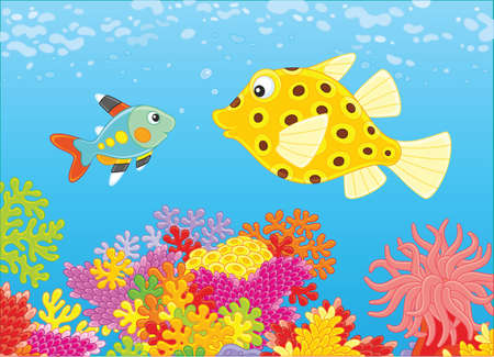 X 선 생선과 상자 물고기.
