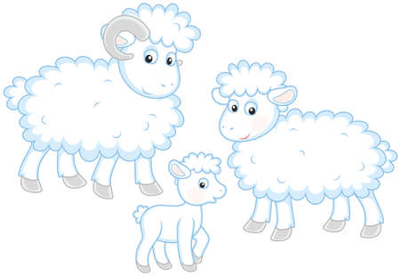 Sheep, lamb and ram Illustration
