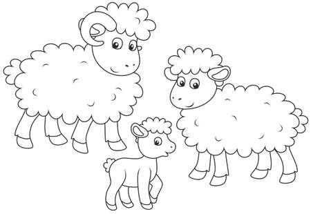 Sheep, lamb and ram outlined illustration.