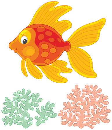 Goldfish swimming over corals