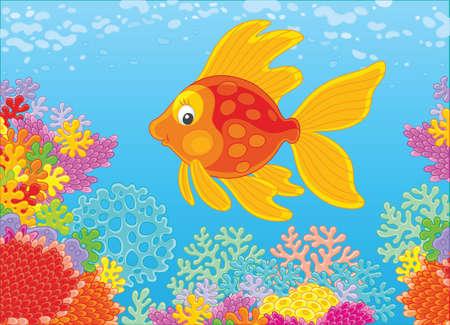 Goldfish swimming over amazing corals