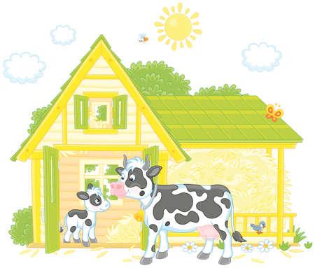 Spotted cow and calf near a barn on a milk farm