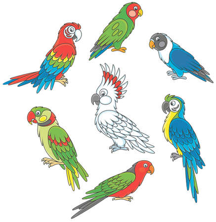 Collection of amusing and colorful tropical parrots