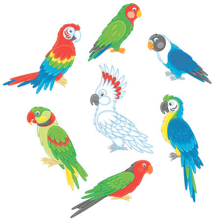 Collection of colorful tropical parrots
