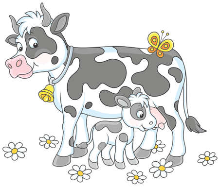 Spotted cow feeding her little calf on white background illustration.