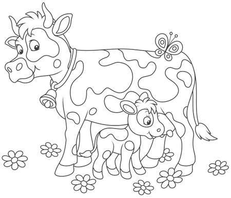 Spotted cow feeding her little calf on black and white illustration.