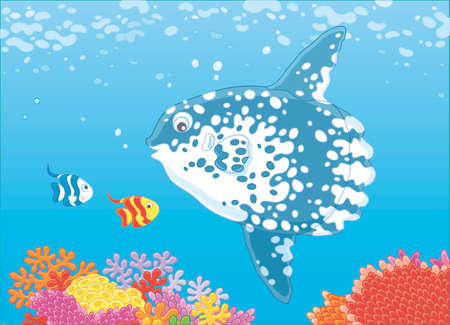 Big fish-moon and small butterfly fishes swimming over corals of a reef in blue water of a tropical sea, vector illustration in a cartoon style