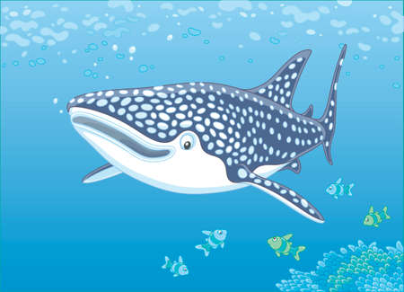 Big whale shark and small coral fishes swimming over a reef in the blue water of a tropical sea, vector illustration in a cartoon style Vectores