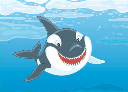 Killer whale swimming among drifting ice floes in blue water, vector illustration in a cartoon style Illustration