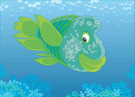 Large humphead wrasse swimming over a coral reef in the blue water of a tropical sea, vector illustration in a cartoon style