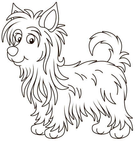 Little funny Australian silky terrier with long hair, black and white vector illustration in a cartoon style for a coloring book