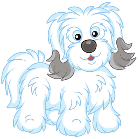 Little funny Bichon Avanese lap-dog with long white and grey hair, vector illustration in a cartoon style