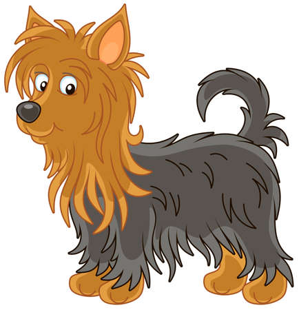 Little funny Australian silky terrier with long black and brown hair, vector illustration in a cartoon style