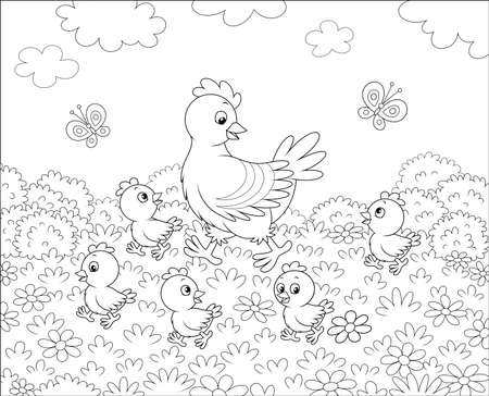 Hen with little chicks walking on grass among flowers on a summer meadow on a sunny day, black and white vector illustration in a cartoon style for a coloring book 일러스트