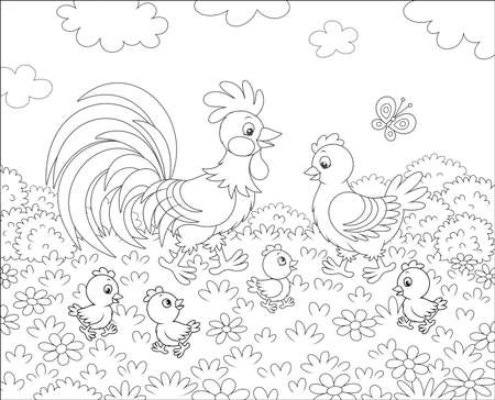 Family of a rooster, a cute hen and little chicks walking among flowers on grass of a summer field, black and white vector illustration in a cartoon style for a coloring book