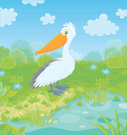 Big white pelican by a small lake on a green meadow on a summer day, vector illustration in a cartoon style