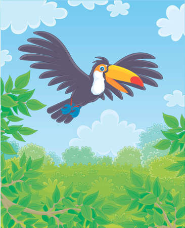 Black and white exotic toucan with a big colorful beak flying over green tropical jungle on a sunny summer day, vector illustrations in a cartoon style