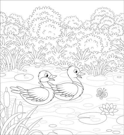 Wild ducks swimming in a small lake on a meadow on a summer day, black and white vector illustration in a cartoon style for a coloring book Çizim