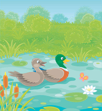 Wild ducks swimming in a small blue lake on a green meadow on a summer day, vector illustration in a cartoon style