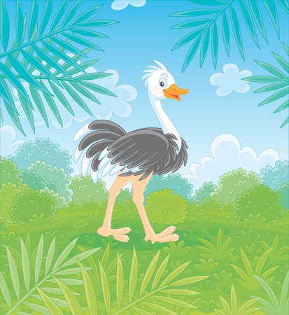 Funny black and white ostrich walking on green grass in savanna against the background of bushes and palm branches on a warm summer day, vector cartoon illustration
