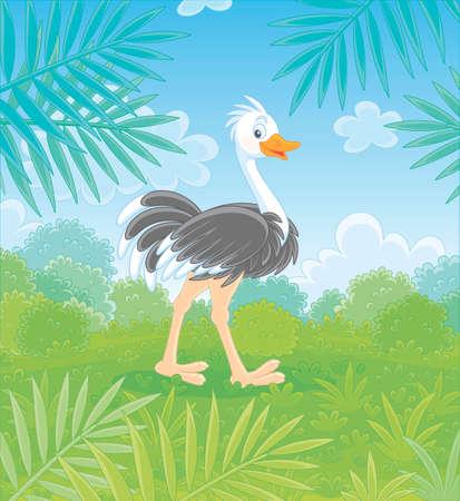 Lustiger schwarz-weißer Strauß, der an einem warmen Sommertag auf grünem Gras in der Savanne vor dem Hintergrund von Büschen und Palmzweigen geht, Vektor-Cartoon-Illustration