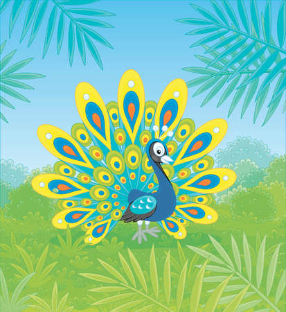 Exotic peacock with a large ornate tail walking on green grass against the tropical background of bushes and palm branches on a summer day, vector cartoon illustration