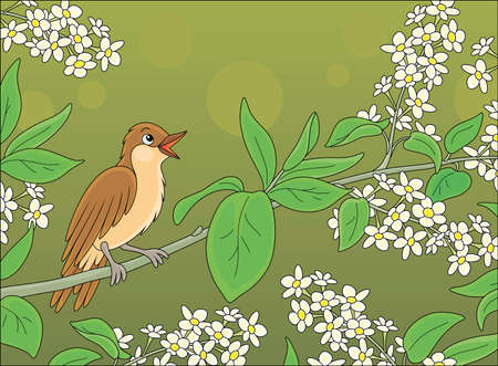 Small singing nightingale perched on a branch with white flowers of a spring blooming tree, vector cartoon illustration 向量圖像