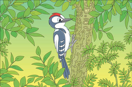 Funny woodpecker climbing on a tree and drumming a trunk to find insects for dinner in a green summer forest, vector cartoon illustration