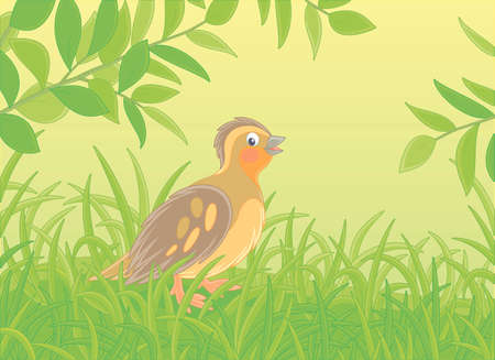 Small quail with brown camouflaged plumage walking in green thick grass of a glade on a warm summer day, vector cartoon illustration