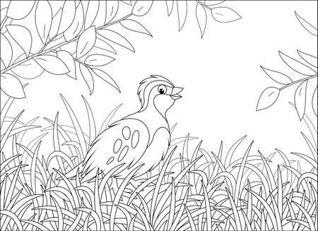 Small quail with camouflaged plumage walking in thick grass of a forest glade on a warm summer day, black and white vector cartoon illustration for a coloring book page