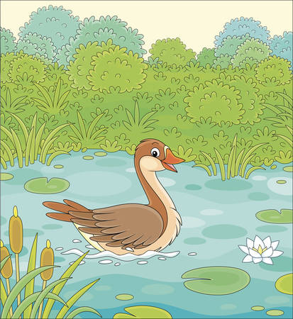 Big wild goose swimming among reeds, floating leaves and flowers of white water lily in a small blue lake on a green meadow on a warm summer day, vector cartoon illustration