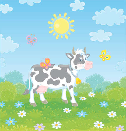 Spotted black and white dairy cow walking on lush grass among colorful flowers and flittering color butterflies on a green summer field on a sunny warm day, vector cartoon illustration Illustration
