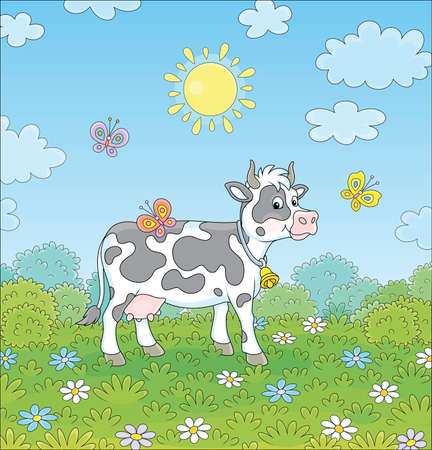 Spotted black and white dairy cow walking on lush grass among colorful flowers and flittering color butterflies on a green summer field on a sunny warm day, vector cartoon illustration Vectores