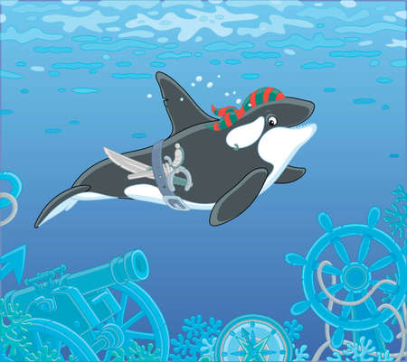Killer whale swimming with a pirate bandana, a saber and a pistol over wreckage of an old sunken sail ship on a see bottom, vector cartoon illustration