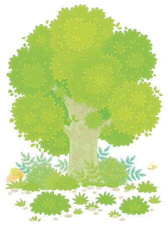 Big branchy oak tree, green bushes, grass and mushrooms on a pretty forest glade in summer, vector cartoon illustration on a white background Illustration
