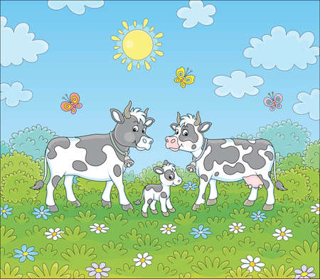Spotted black and white cow, a bull and a small calf walking on lush grass among color flowers and flittering butterflies on a green summer field on a sunny day, vector cartoon illustration