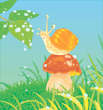Funny garden snail with a beautiful spotted shell, sitting on a big mushroom among green grass on a forest glade, friendly smiling and playing with bright rain drops, vector cartoon illustration