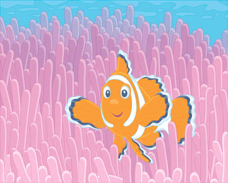 Funny striped anemonefish swimming among bright poisonous stings of a pink anemone in blue water of a colorful coral reef in a tropical sea, vector cartoon illustration