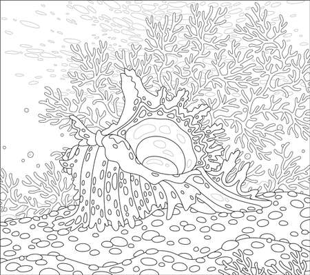 Beautiful fancy shell with spots among exotic branchy corals on sand of a tropical reef in a southern sea, black and white outline vector cartoon illustration for a coloring book page Illustration