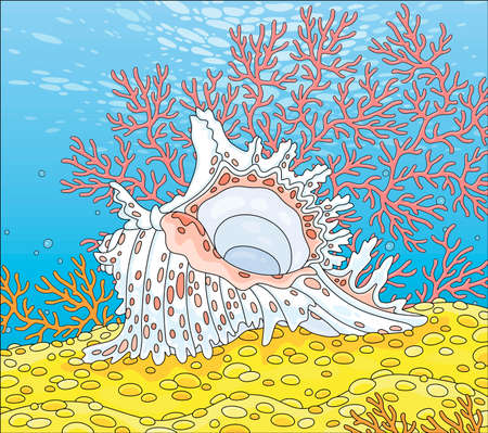 Beautiful fancy white shell with pink spots among colorful branch corals on bright yellow sand of a tropical reef in a southern sea, cartoon illustration