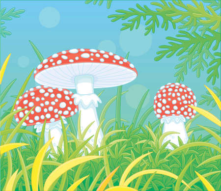 Three poisonous fly agarics with bright red caps and white spots hiding among thick grass on a pretty glade in a wild forest, cartoon illustration