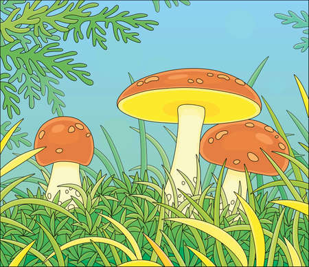 Three edible mushrooms with big brown caps hiding in green thick grass on a pretty forest glade on a warm summer day, vector cartoon illustration Illustration