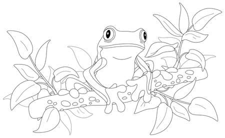 Funny poisonous tree frog sitting on a branch in a wild tropical jungle, black and white outline vector cartoon illustration for a coloring book page