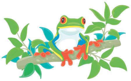Funny colorful and poisonous tree frog sitting on a green branch in a wild tropical jungle, vector cartoon illustration on a white background