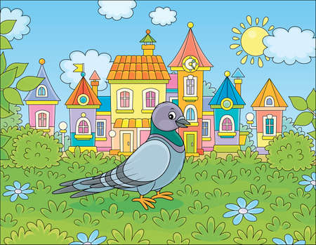 Gray pigeon walking on green grass of a summer town park on a sunny warm day, vector cartoon illustration