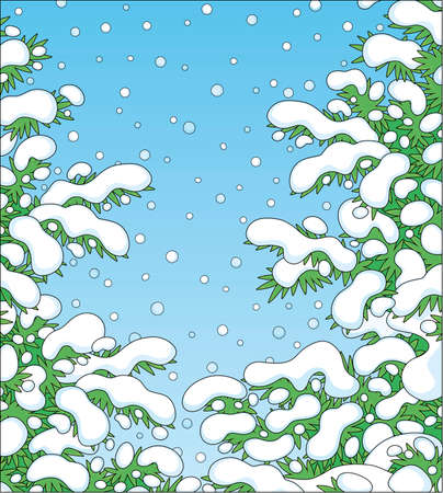 Snow-covered prickly green fir branches in a white winter forest on a snowy and frosty beautiful day, vector cartoon illustration