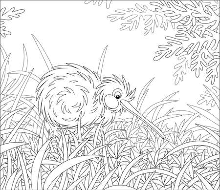 Amusing flightless New Zealand kiwi bird with shaggy feathers and a long bill walking among tall grass, black and white outline vector cartoon illustration for a coloring book page Иллюстрация